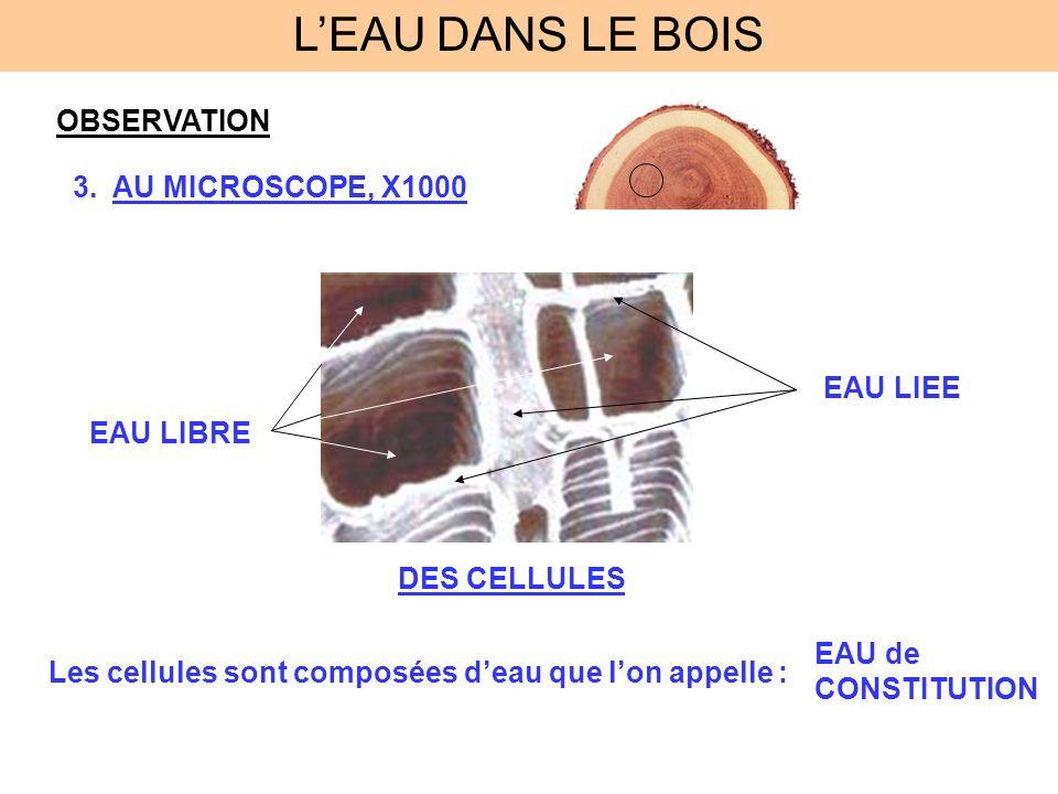 OBSERVATION 3.AU MICROSCOPE, X1000 DES CELLULES EAU LIBRE EAU LIEE Les cellules sont composées deau que lon appelle : EAU de CONSTITUTION LEAU DANS LE