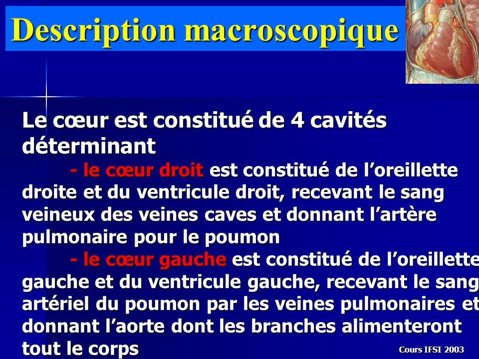 Cours IFSI 2003 Description macroscopique Le cœur est constitué de 4 cavités déterminant - le cœur droit est constitué de loreillette droite et du ven