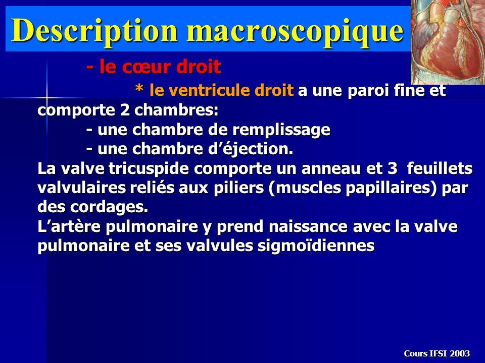 Cours IFSI 2003 Description macroscopique - le cœur droit * le ventricule droit a une paroi fine et comporte 2 chambres: - une chambre de remplissage