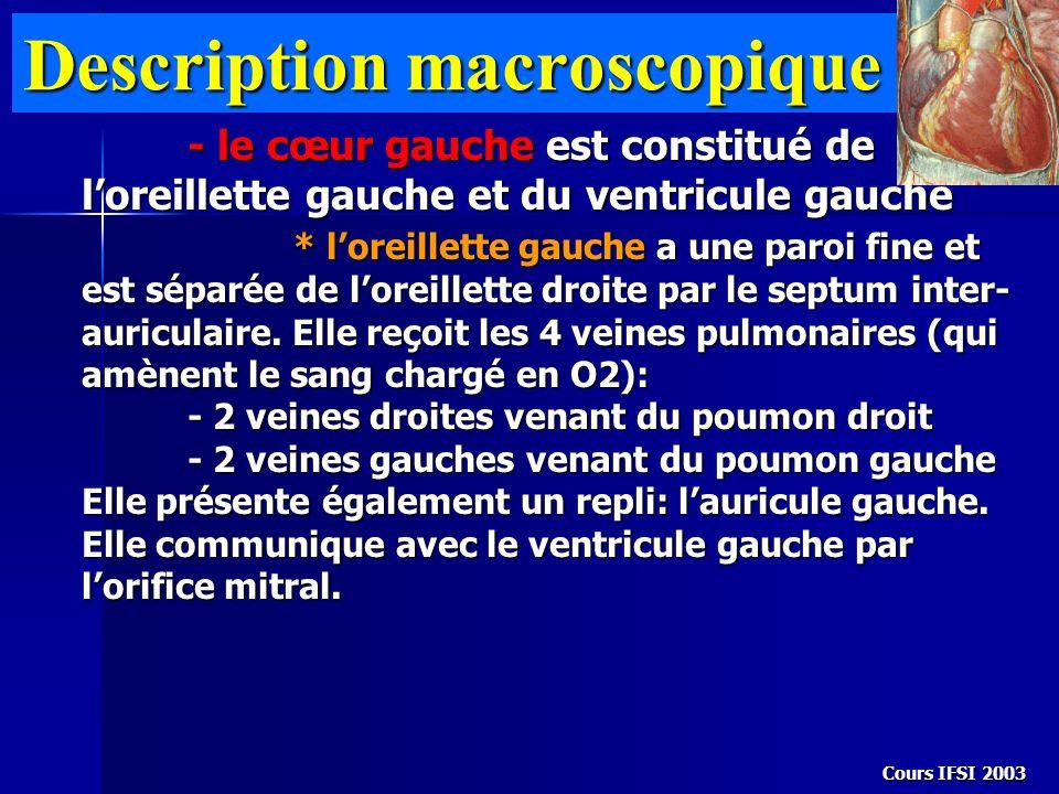 Cours IFSI 2003 Description macroscopique - le cœur gauche est constitué de loreillette gauche et du ventricule gauche * loreillette gauche a une paro