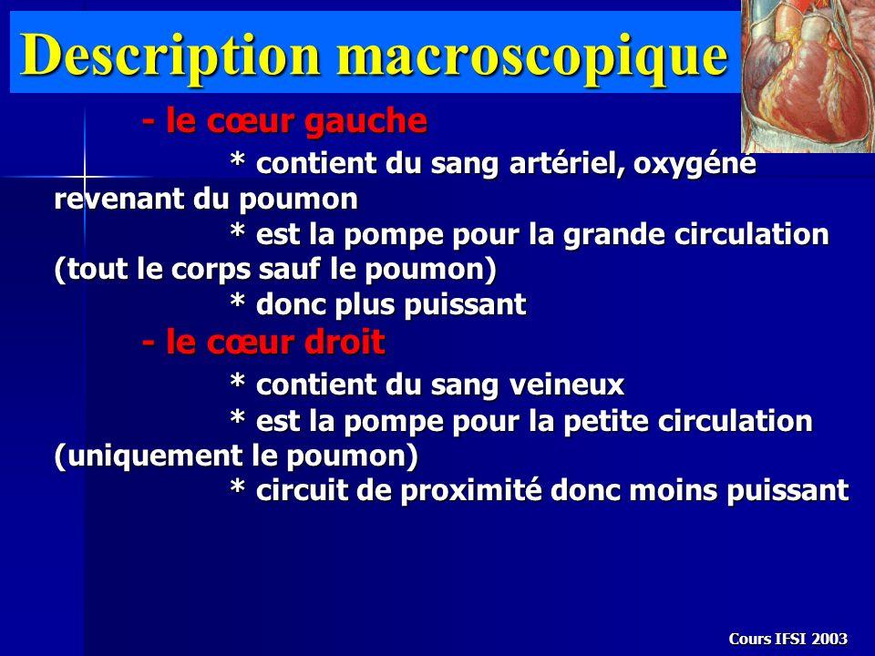Cours IFSI 2003 Description macroscopique - le cœur gauche * contient du sang artériel, oxygéné revenant du poumon * est la pompe pour la grande circu