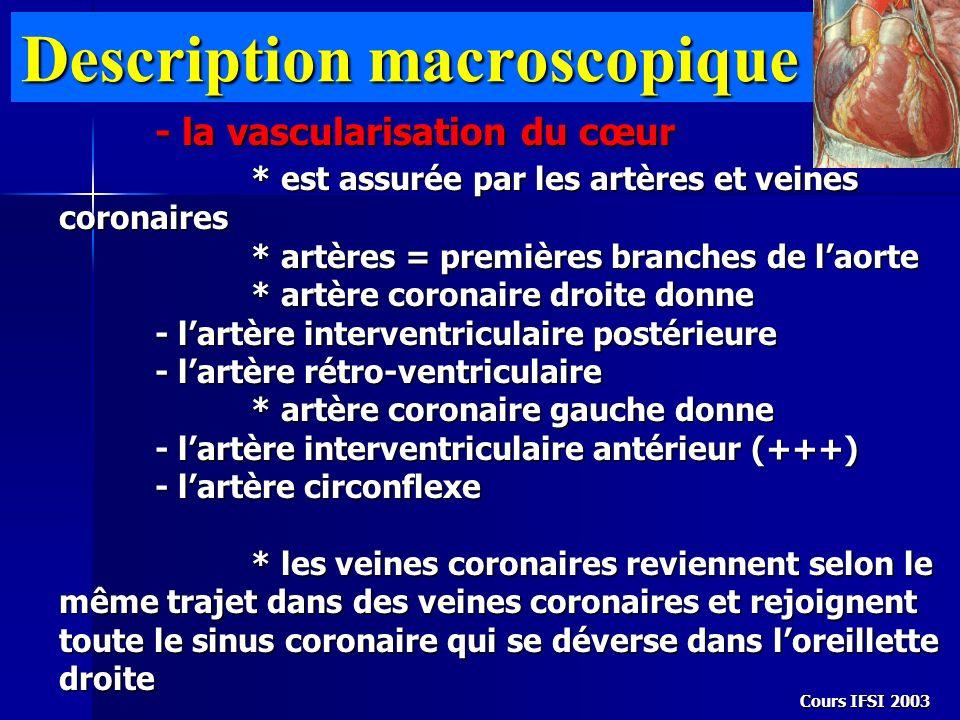 Description macroscopique - la vascularisation du cœur * est assurée par les artères et veines coronaires * artères = premières branches de laorte * a