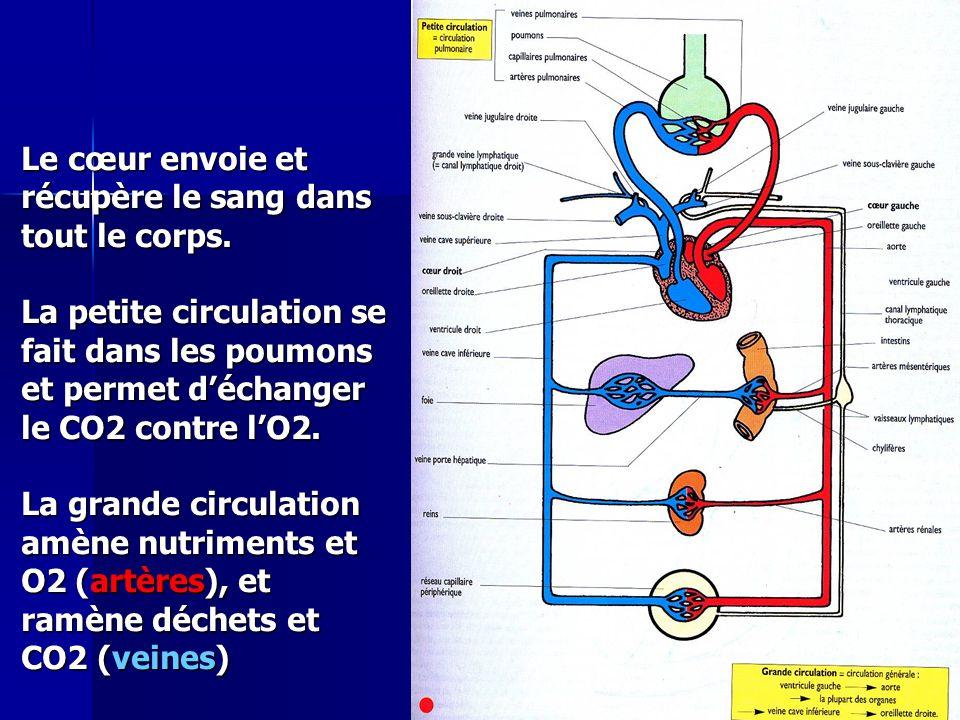 Cours IFSI 2003 Le cœur envoie et récupère le sang dans tout le corps. La petite circulation se fait dans les poumons et permet déchanger le CO2 contr
