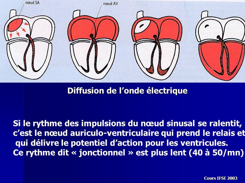 Cours IFSI 2003 Diffusion de londe électrique Si le rythme des impulsions du nœud sinusal se ralentit, cest le nœud auriculo-ventriculaire qui prend l