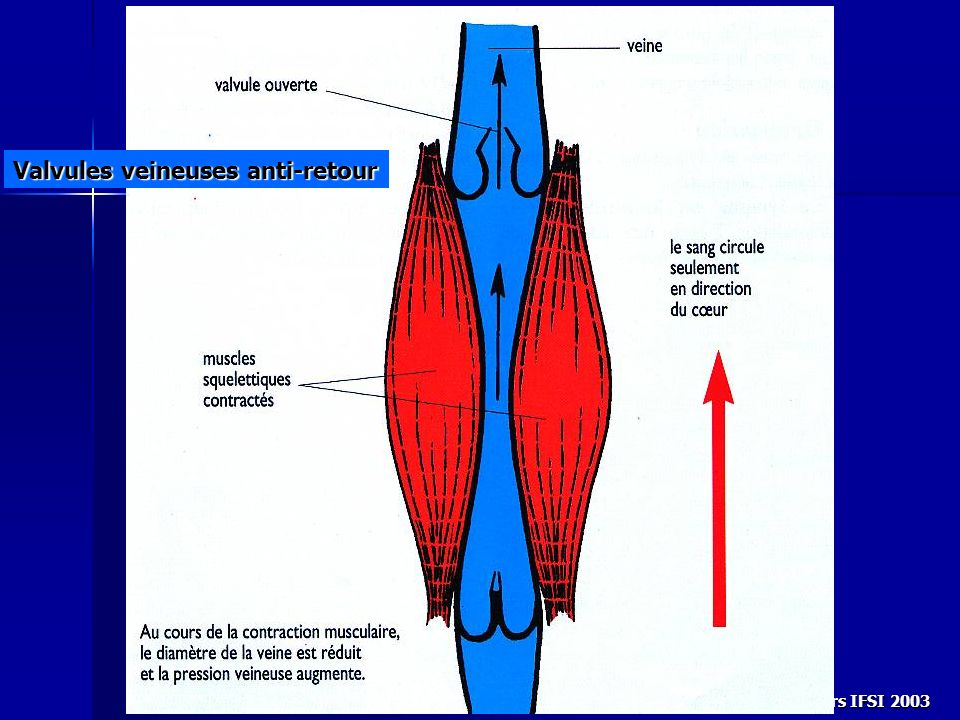 Cours IFSI 2003 Valvules veineuses anti-retour
