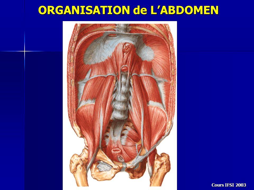 Cours IFSI 2003 ORGANISATION de LABDOMEN