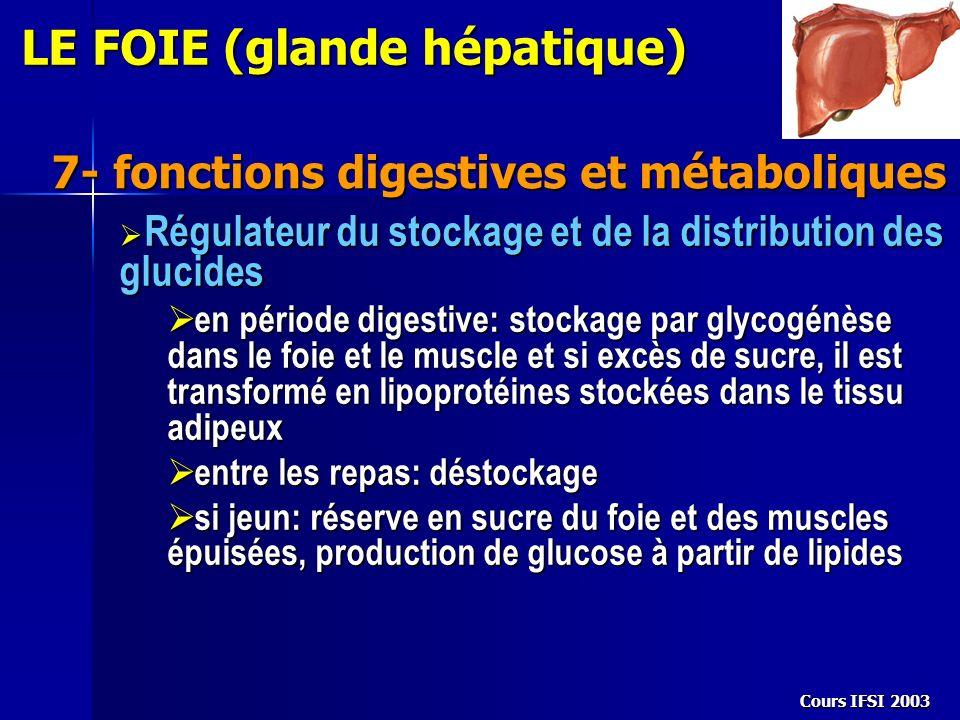 Cours IFSI 2003 7- fonctions digestives et métaboliques LE FOIE (glande hépatique) Régulateur du stockage et de la distribution des glucides Régulateu