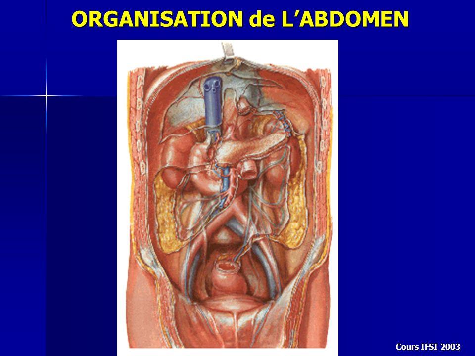 Cours IFSI 2003 3- morphologie macroscopique Sa vascularisation artérielle provient des branches du tronc coeliaque et de lartère mésentérique sup.