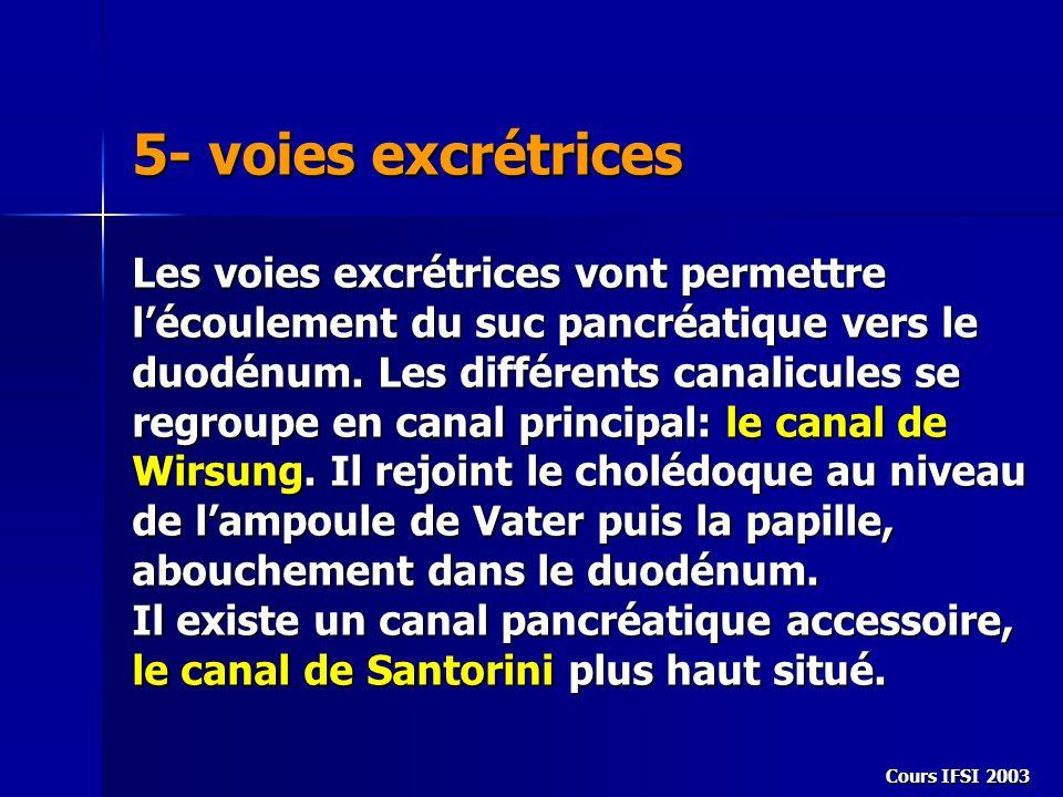 Cours IFSI 2003 5- voies excrétrices Les voies excrétrices vont permettre lécoulement du suc pancréatique vers le duodénum. Les différents canalicules