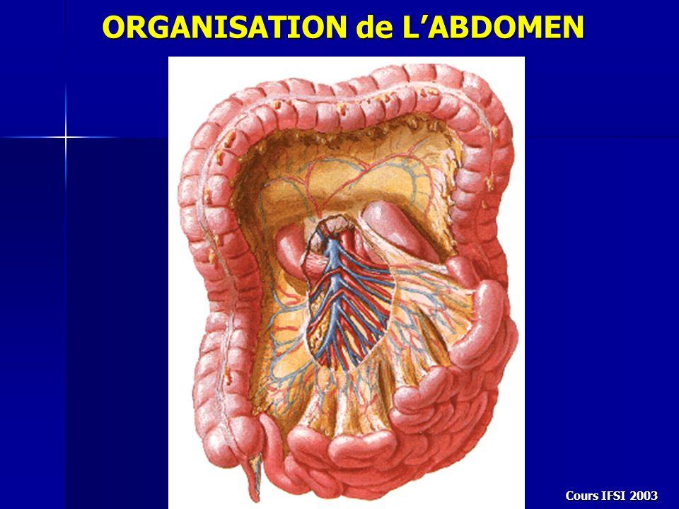 Cours IFSI 2003 Abdomen est divisé en 2 étages par le méso-colon transverse: - Étage sous-mésocolique - Étage sus-mésocolique ORGANISATION de LABDOMEN