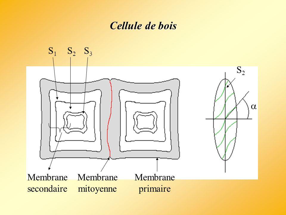 e1e1 e3e3 e2e2 e1e1 e1e1 4 Eau libre Eau liée Point de saturation des fibres État anhydre e 1 > e 2 >e 3 APPARITION DU RETRAIT État saturé 1235