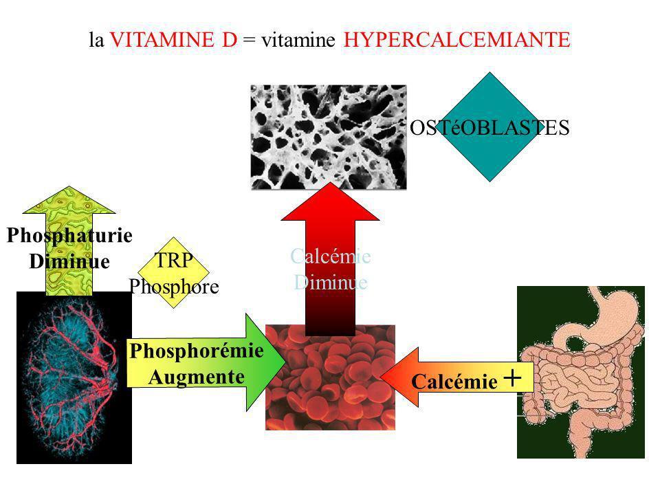 la VITAMINE D = vitamine HYPERCALCEMIANTE Phosphaturie Diminue OSTéOBLASTES Phosphorémie Augmente Calcémie + TRP Phosphore Calcémie Diminue