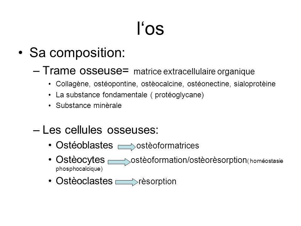 los Sa composition: –Trame osseuse= matrice extracellulaire organique Collagène, ostéopontine, ostèocalcine, ostéonectine, sialoprotèine La substance