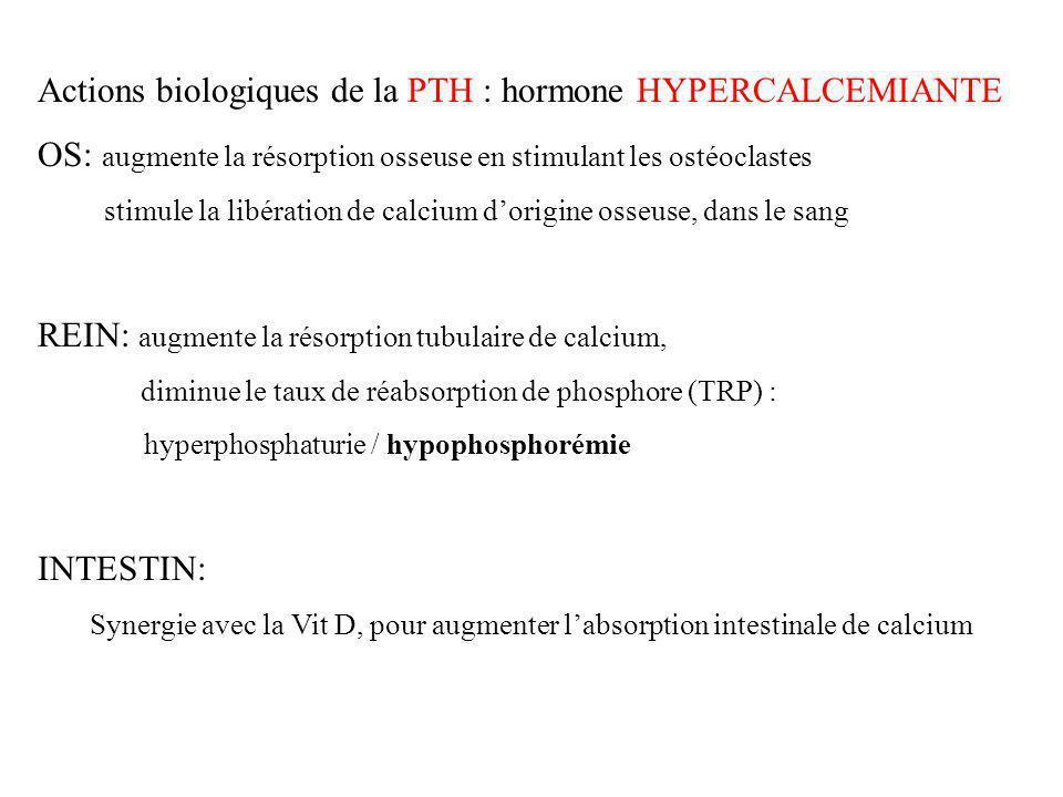 Actions biologiques de la PTH : hormone HYPERCALCEMIANTE OS: augmente la résorption osseuse en stimulant les ostéoclastes stimule la libération de cal