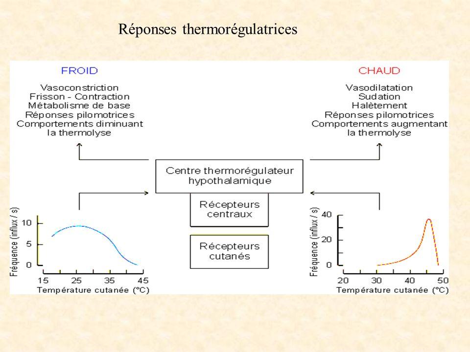 Réponses thermorégulatrices