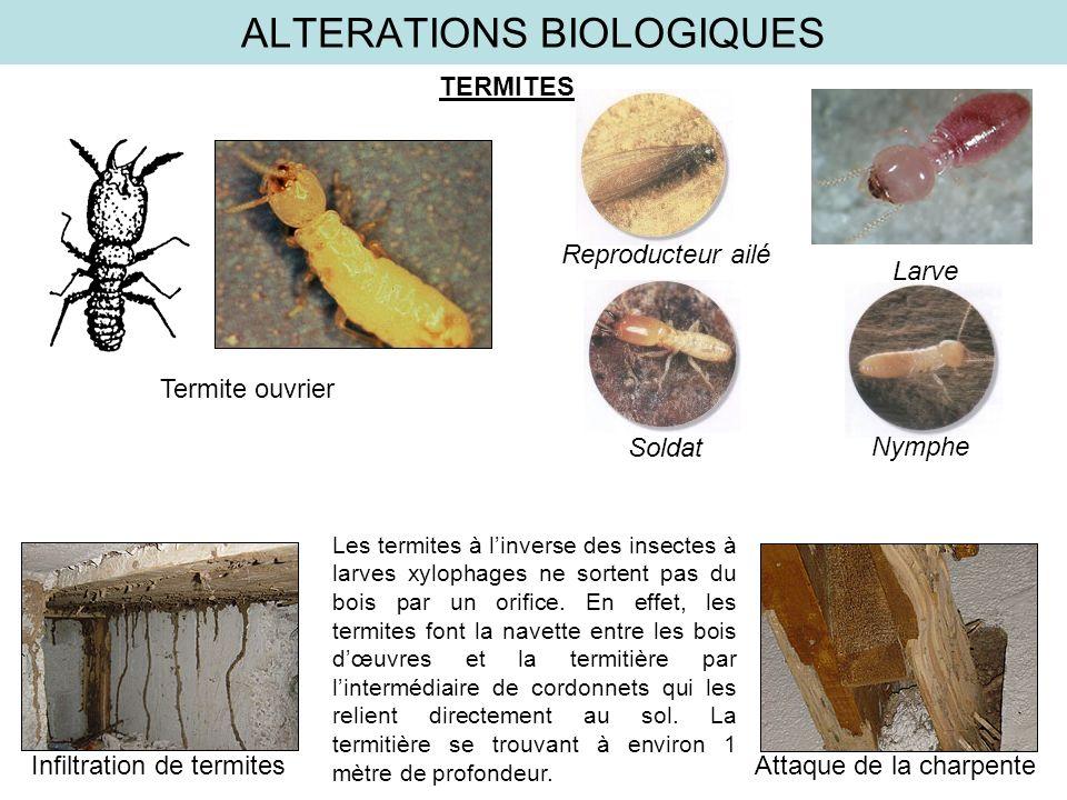 ALTERATIONS BIOLOGIQUES TERMITES Termite ouvrier NympheReproducteur ailé Soldat Larve Infiltration de termites Attaque de la charpente Les termites à