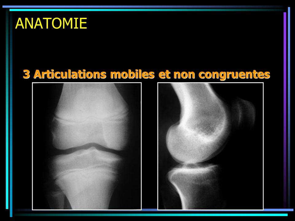 ANATOMIE 3 Articulations mobiles et non congruentes