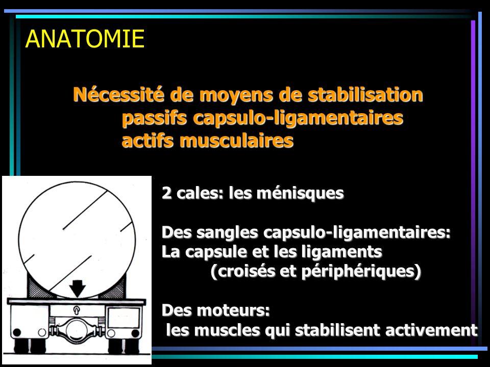 ANATOMIE Nécessité de moyens de stabilisation passifs capsulo-ligamentaires actifs musculaires 2 cales: les ménisques Des sangles capsulo-ligamentaire