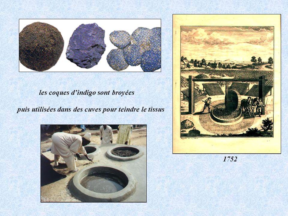 les coques dindigo sont broyées 1752 puis utilisées dans des cuves pour teindre le tissus