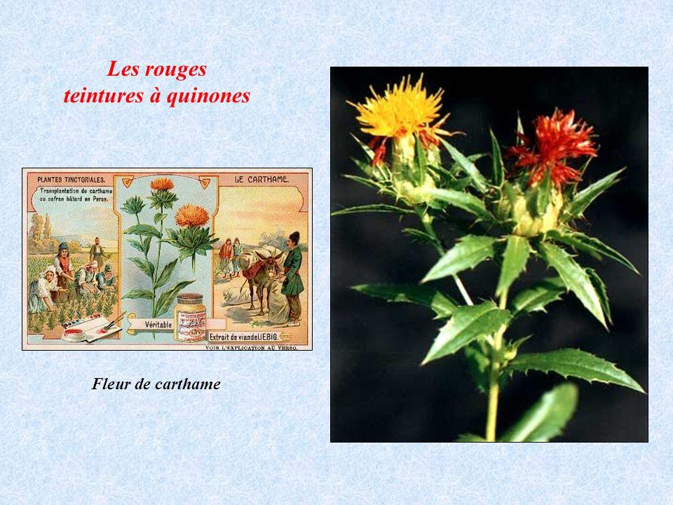 Fleur de carthame Les rouges teintures à quinones