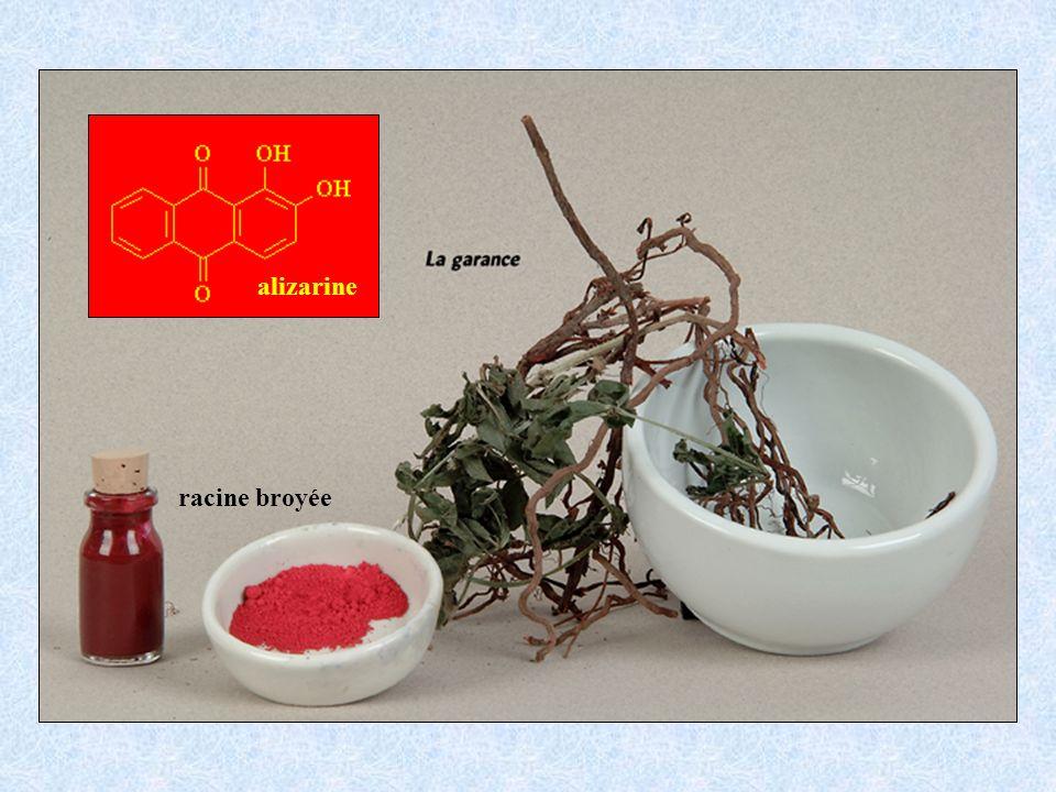 racine broyée alizarine