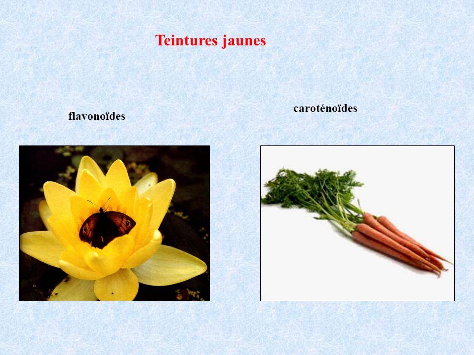 Teintures jaunes flavonoïdes caroténoïdes