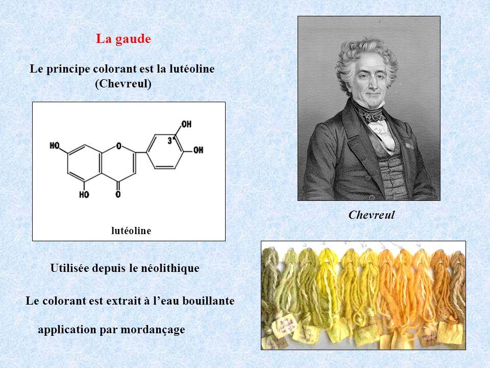 La gaude Le principe colorant est la lutéoline (Chevreul) Le colorant est extrait à leau bouillante application par mordançage Utilisée depuis le néol