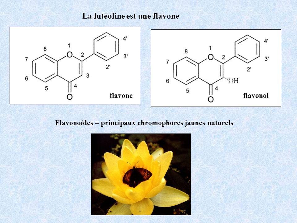 flavone OH flavonol La lutéoline est une flavone Flavonoïdes = principaux chromophores jaunes naturels