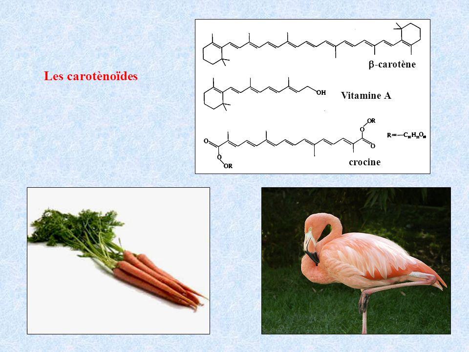 Les carotènoïdes Vitamine A -carotène crocine