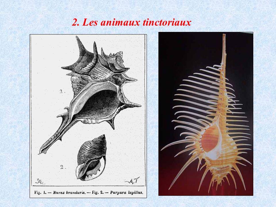 2. Les animaux tinctoriaux
