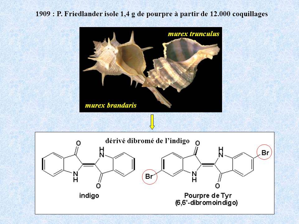 1909 : P. Friedlander isole 1,4 g de pourpre à partir de 12.000 coquillages dérivé dibromé de lindigo murex trunculus murex brandaris