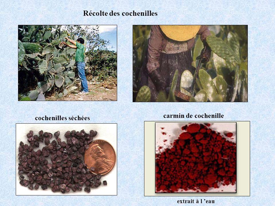 Récolte des cochenilles cochenilles séchées carmin de cochenille extrait à l eau