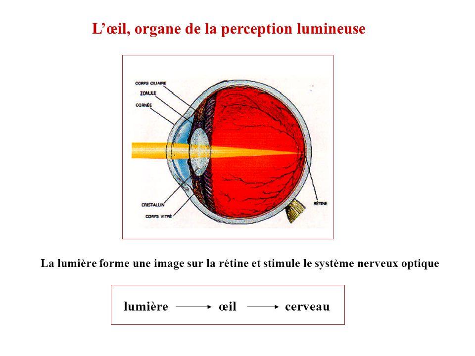 Lœil, organe de la perception lumineuse La lumière forme une image sur la rétine et stimule le système nerveux optique lumière œil cerveau