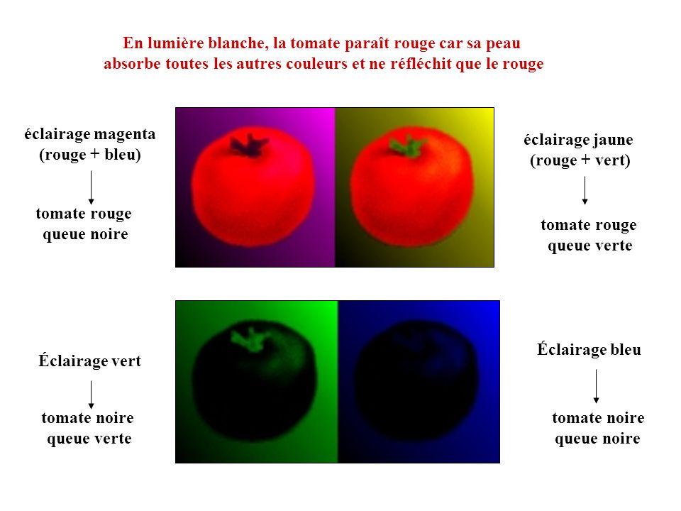 En lumière blanche, la tomate paraît rouge car sa peau absorbe toutes les autres couleurs et ne réfléchit que le rouge éclairage jaune (rouge + vert)