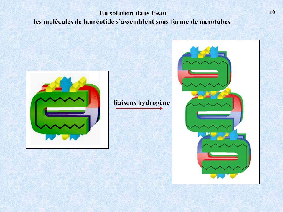En solution dans leau les molécules de lanréotide sassemblent sous forme de nanotubes liaisons hydrogène 10