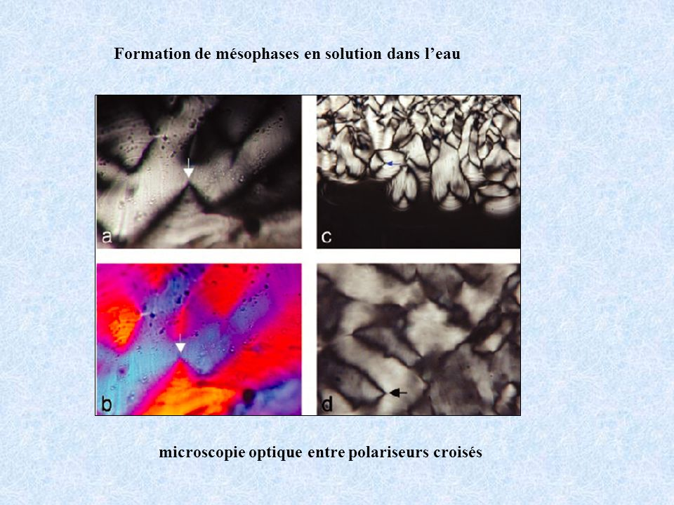 Formation de mésophases en solution dans leau microscopie optique entre polariseurs croisés