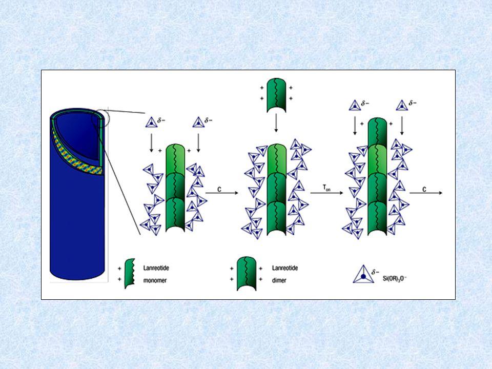 Les nanotubes sont formés de 2 tubes de silice séparés par un tube de lanréotide 24,6 nm 9,911,313,314,7 r(nm) SiO 2 endo et exo template