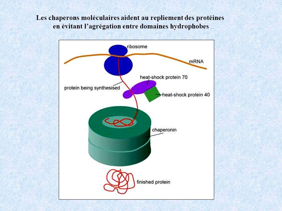 constituées de lassemblage de sous-unités (HSP) formant deux anneaux superposés HSP = Heat Shock Proteins