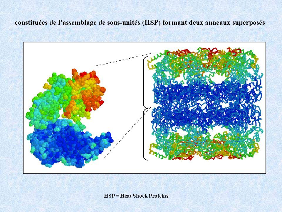 Chaperons moléculaires vue de dessusvue de côté 15nm constituées de lassemblage de sous-unités protéiques formant deux anneaux superposés