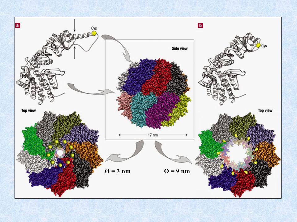Les nanoparticules dor viennent se fixer sur les groupements thiols Fixation sélective selon la taille Pore particule 3 nm 5 nm 9 nm 10 nm