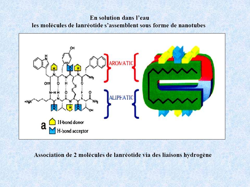 En solution dans leau les molécules de lanréotide sassemblent sous forme de nanotubes Association de 2 molécules de lanréotide via des liaisons hydrog
