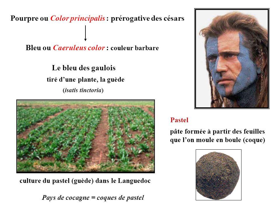 Pourpre ou Color principalis : prérogative des césars Bleu ou Caeruleus color : couleur barbare Le bleu des gaulois tiré dune plante, la guède culture