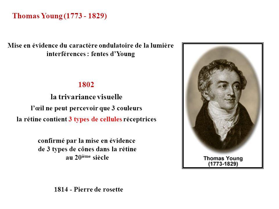 confirmé par la mise en évidence de 3 types de cônes dans la rétine au 20 ième siècle 1802 la trivariance visuelle lœil ne peut percevoir que 3 couleu