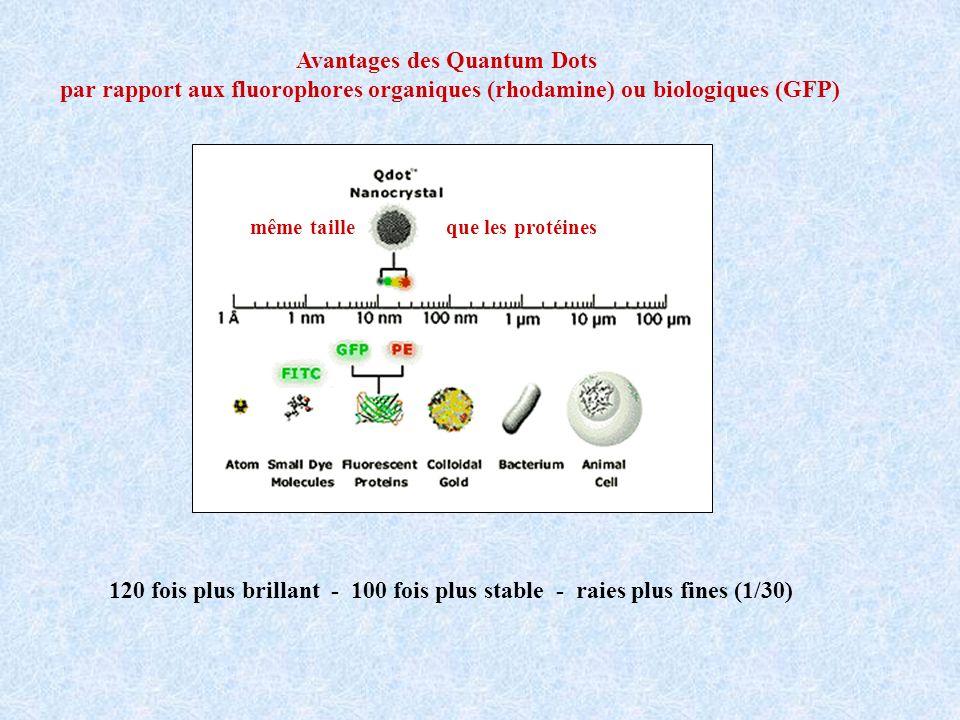 Avantages des Quantum Dots par rapport aux fluorophores organiques (rhodamine) ou biologiques (GFP) 120 fois plus brillant - 100 fois plus stable - ra