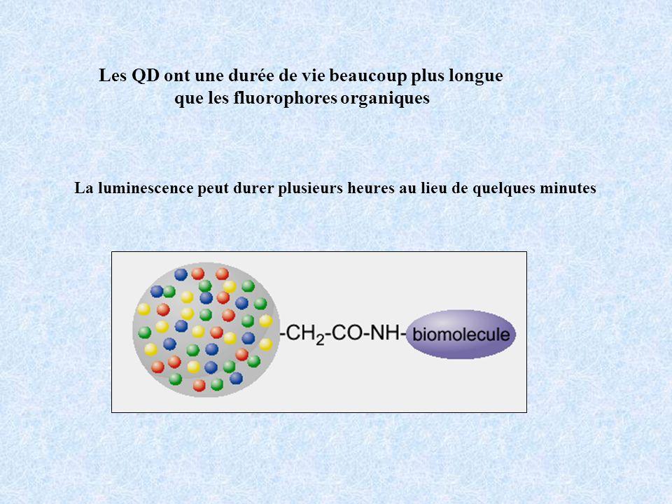 Les QD ont une durée de vie beaucoup plus longue que les fluorophores organiques La luminescence peut durer plusieurs heures au lieu de quelques minut
