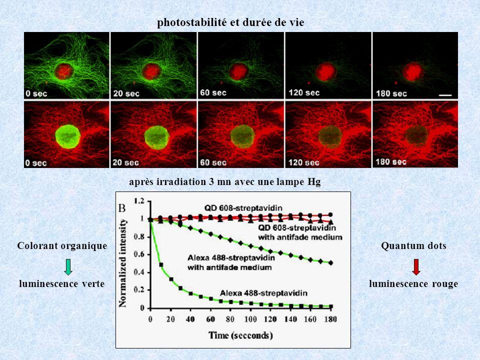 Colorant organique luminescence verte Quantum dots luminescence rouge photostabilité et durée de vie après irradiation 3 mn avec une lampe Hg