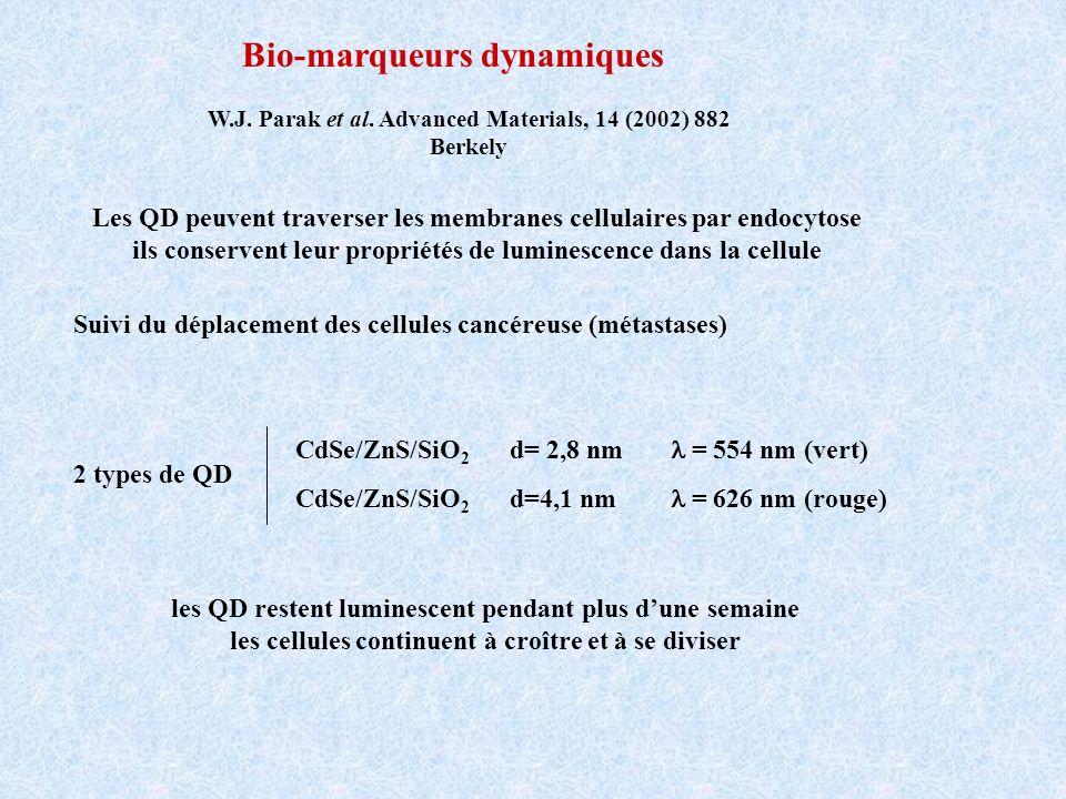 Bio-marqueurs dynamiques Les QD peuvent traverser les membranes cellulaires par endocytose ils conservent leur propriétés de luminescence dans la cell