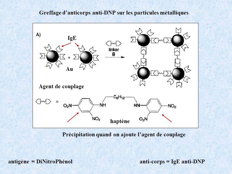 Greffage danticorps anti-DNP sur les particules métalliques Précipitation quand on ajoute lagent de couplage IgE haptène Au Agent de couplage antigène = DiNitroPhénolanti-corps = IgE anti-DNP