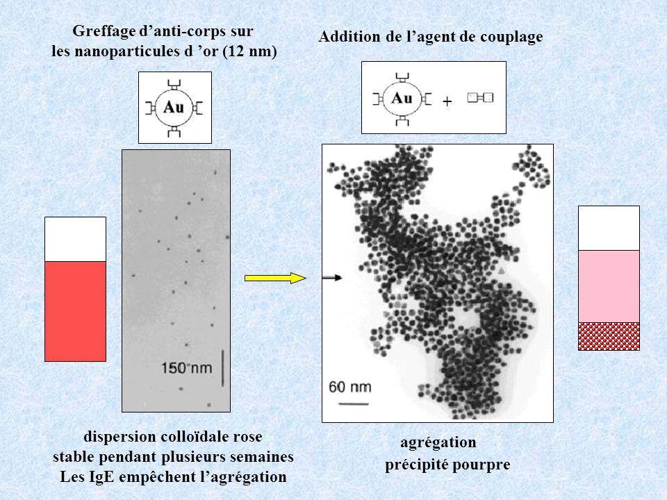 dispersion colloïdale rose stable pendant plusieurs semaines Les IgE empêchent lagrégation agrégation + Greffage danti-corps sur les nanoparticules d or (12 nm) Addition de lagent de couplage précipité pourpre