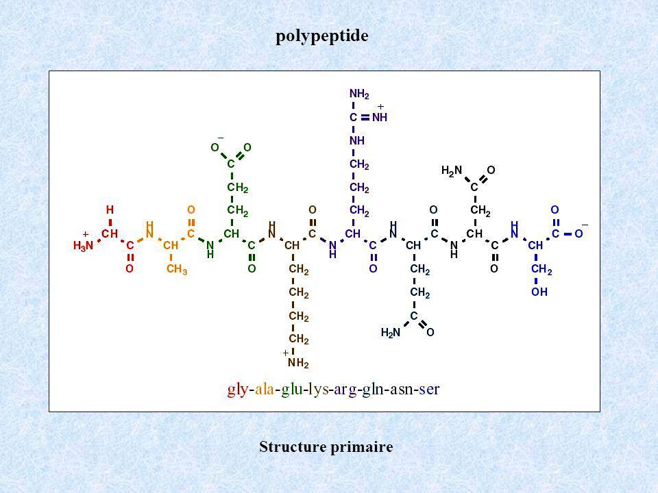 polypeptide Structure primaire